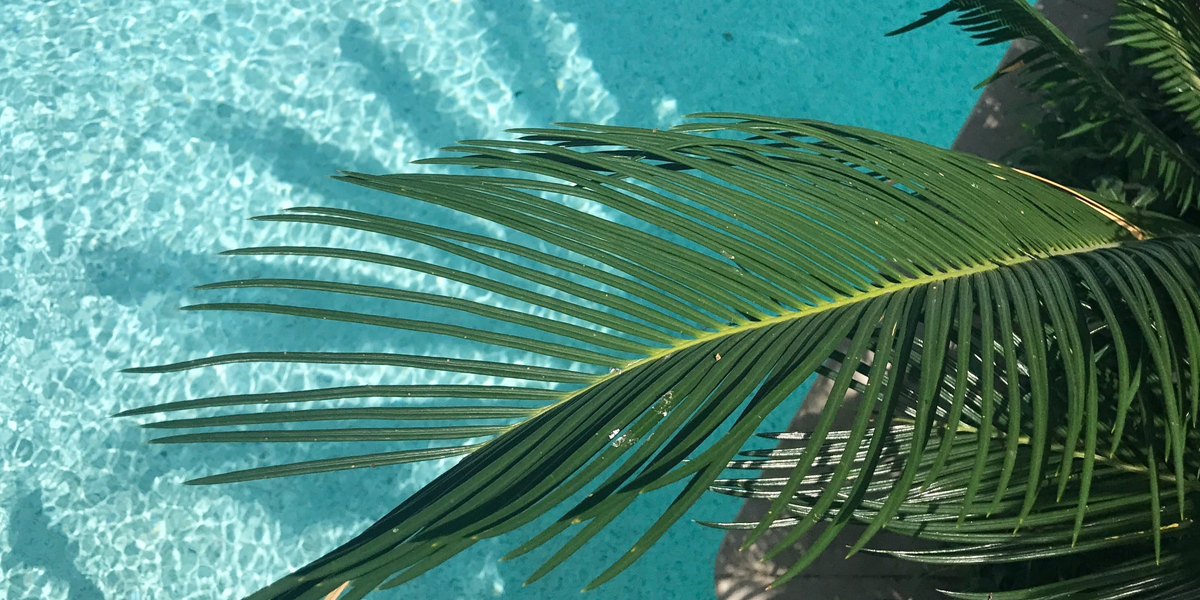 An outdoor artificial palm tree and turn any space into a tropical retreat